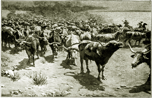 E Cattle Drive Cattle Drives 1800s | ...